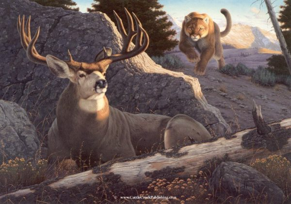 Ambush  Rushing in the last few yards this mountain lion (cougar) is about to ambush this trophy mule deer duck. Ambush mansanarez wildlife art
