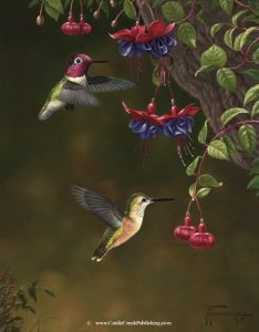 Blossom Buddies  Hummingbirds feeding on their favorite Fuschia flowers. Blossom Buddies mansanarez wildlife art