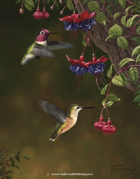 Blossom Buddies  Hummingbirds feeding on their favorite Fuschia flowers. Blossom Buddies mansanarez wildlife art