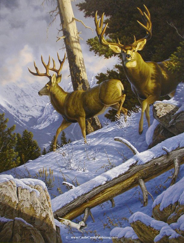 Breaking Cover  Something has alerted this pair of trophy mule deer bucks from their beds. Notice the ermine with his mouse n the bottom of the painting. Breaking Cover mansanarez wildlife art