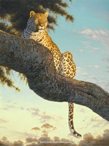 Distant Gaze  Something in the distance has caught this leopards attention as he rests in a tree. Distant Gaze mansanarez wildlife art