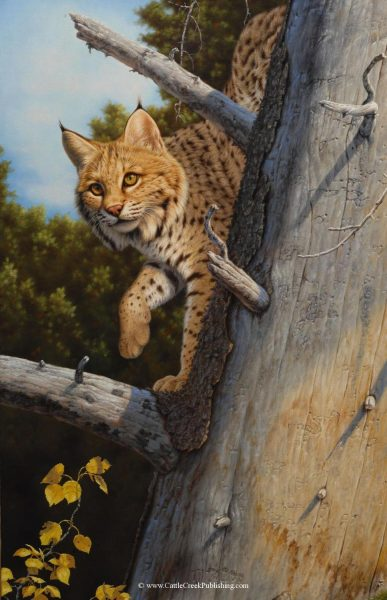 Golden GazeThis bobcat up in a deadfall tree is out prowling on his daily rounds. Golden Gaze mansanarez wildlife art