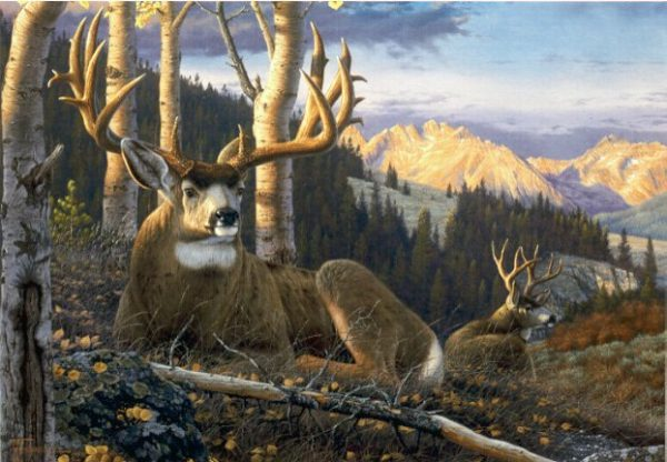 Highlights of Autumn  As the last of the aspen leaves fall from the trees, these mule deer bucks enjoy the calm before the storm. Highlights Of Autumn mansanarez wildlife art