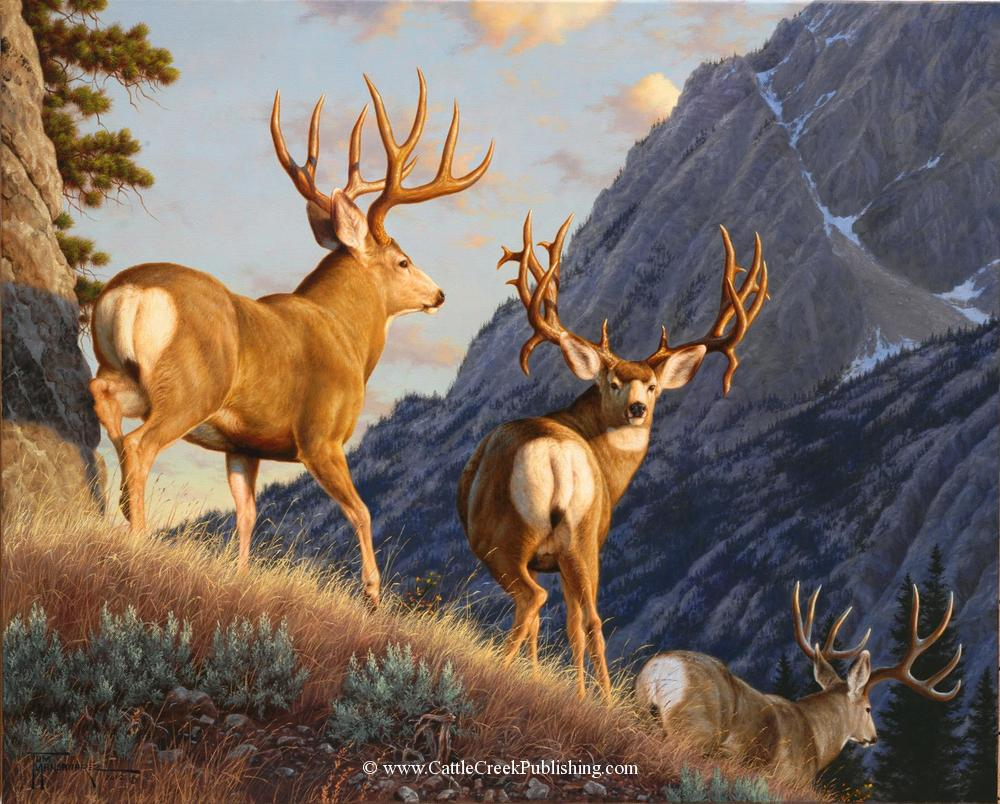 Into the Shadows Three trophy mule deer head down into the timbre to find a bed for the day. Into the Shadows mansanarez wildlife art