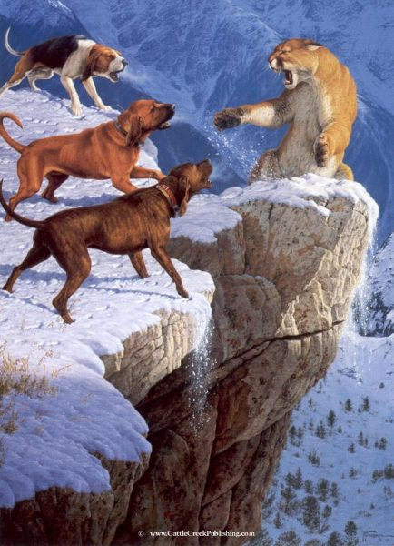 Mountain Fury  Hunting mountain lion, or cougar, with hounds can sometimes get real dangerous. Here on the edge of a sheer cliff is a stand off. Mountain Fury mansanarez wildlife art