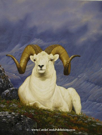 Mountain Pearl  Those snow white pearls of the north known as Dall sheep are beautiful. Mountain Pearl mansanarez wildlife art