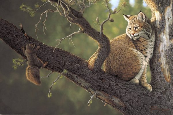 Out On A Limb  This squirrel has scrambled up the wrong limb bumping into this bobcat. Out On A Limb mansanarez wildlife art