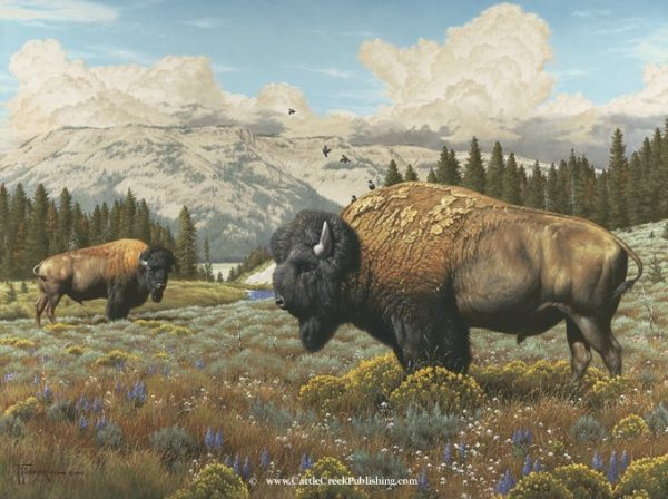 Range Boss  Among the wildflowers and rabbit boroughs these buffalo bulls, called Bison, carry on their daily routine. Range Boss mansanarez wildlife art