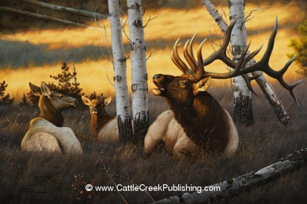 Royal Summons  A bull elk, with his cows bedded for the day, lets out a bugle from his shady resting spot. Royal Summons mansanarez wildlife art