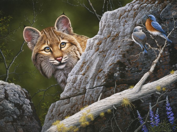 Serenade in Blue  The singing of these mountain blue birds has attracted this hunting bobcat. Serenade in Blue mansanarez wildlife art
