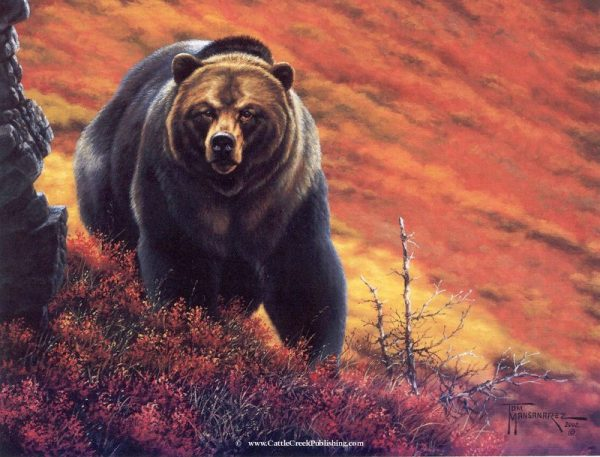 Silvertip  Fall blueberries in Alaska turn vibrant orange and red and frame this silver tip grizzly bear. Silvertip mansanarez wildlife art