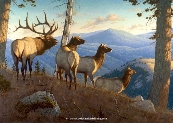 Sounds of Autumn  Distant bugles attract the attention of this full elk and his harem of cows. Sounds of Autumn mansanarez wildlife art