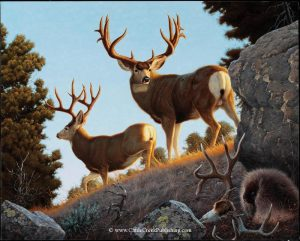 The FallenA pair of trophy mule bucks have happened upon a porcupine gnawing on a winter killed bucks antler for the calcium. The Fallen mansanarez wildlife art