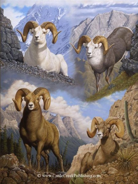"""The Grand Slam  The four rams (the dall sheep, the stone sheep, the bighorn sheep, and the desert bighorn sheep) that make up the coveted """"Grand Slam"""" of North American sheep. The Grand Slam mansanarez wildlife art"""