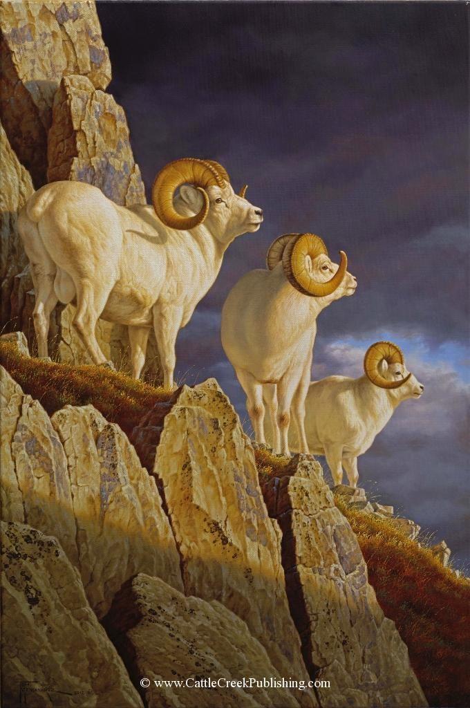 Three Kings  Three dall sheep rams soak up the last rays of a setting sun. Three Kings mansanarez wildlife art