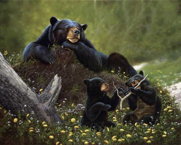 Time Out  A black bear sow naps as her playful bear cubs get out their energy. Time Out mansanarez wildlife art