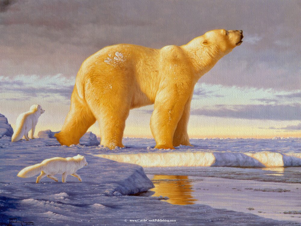 Arctic Dawn Two arctic foxes follow a polar bear on his daily rounds. Arctic Dawn mansanarez wildlife art