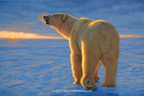 Arctic Sunrise  A big male Polar Bear wanders the ice in search of a meal. Arctic Sunrise mansanarez wildlife art