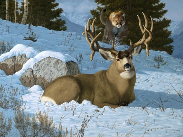 Blind Spot  Bedded and soaking in the warm sun, this big mule deer buck has no clue of the incoming cougar, or mountain lion. Blind Spot mansanarez wildlife art