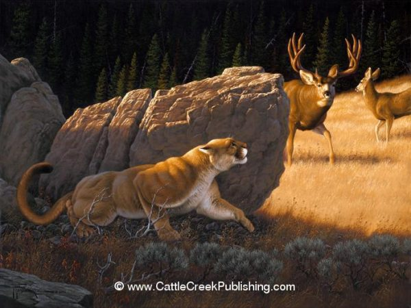 Cause for Alarm  This mule deer buck shows curious caution but is about to meet a hunting mountain lion (cougar). Cause for Alarm mansanarez wildlife art