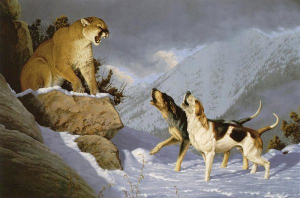 Double Trouble  One of my earliest Cougar and hound hunting paintings. Double Trouble mansanarez wildlife art