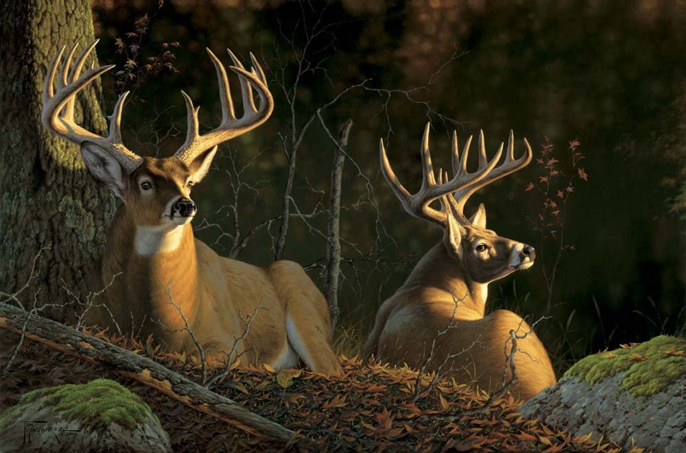 Hardwood Hideaway  Deep in the timbre these Whitetail bucks bed down for the day and are lit up by the morning sun. Hardwood Hideaway mansanarez wildlife art