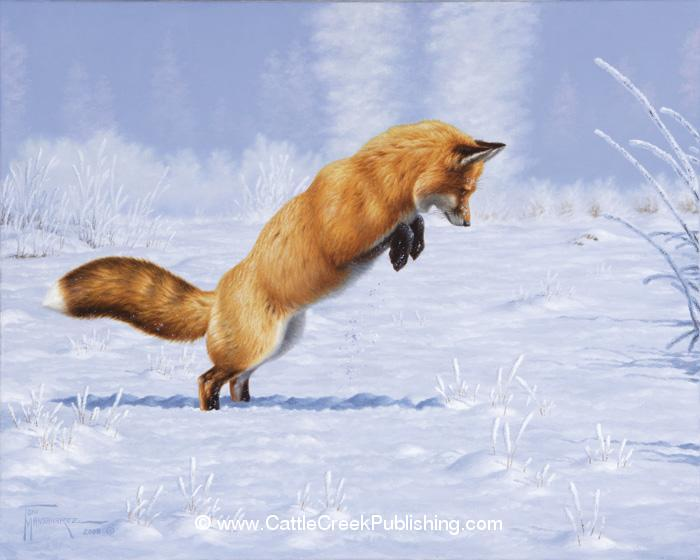 Hidden Treasure <br> A hunting red fox is in full mousing mode in the deep snow. Hidden Treasure mansanarez wildlife art