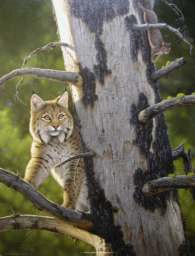 Out of Sight  This squirrel is trying to stay on the opposite side of his old dead tree in order to avoid the hunting bobcat. Out of Sight mansanarez wildlife art