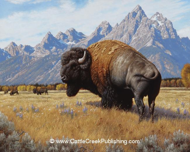 Spirit of the West  A bull buffalo, or bison, enjoys the days of summer in front of the Teton Mountains. Spirit of the West mansanarez wildlife art
