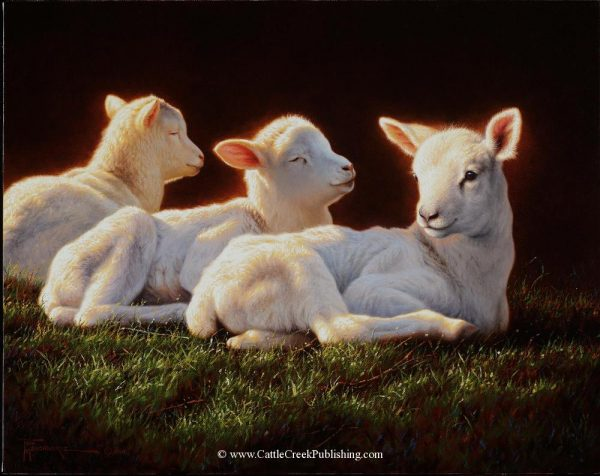 Three SistersThree white lambs bask in the morning sun as sheep love to do. Three Sisters mansanarez wildlife art