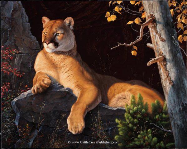 Vantage Point  A large male cougar or mountain lion lies on a rock while surveying his domain. Vantage Point mansanarez wildlife art